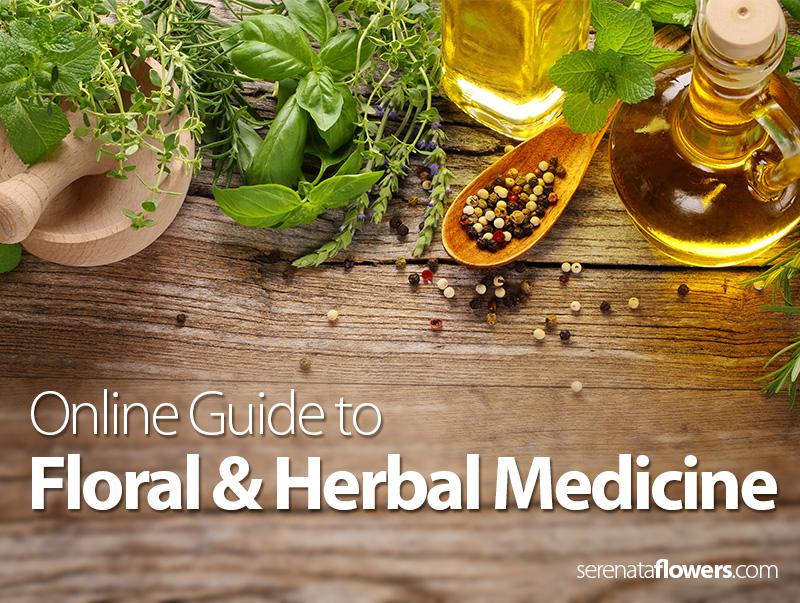 floral-and-herbal-medicine