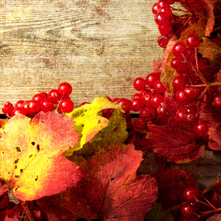 What To Plant In Autumn Winter