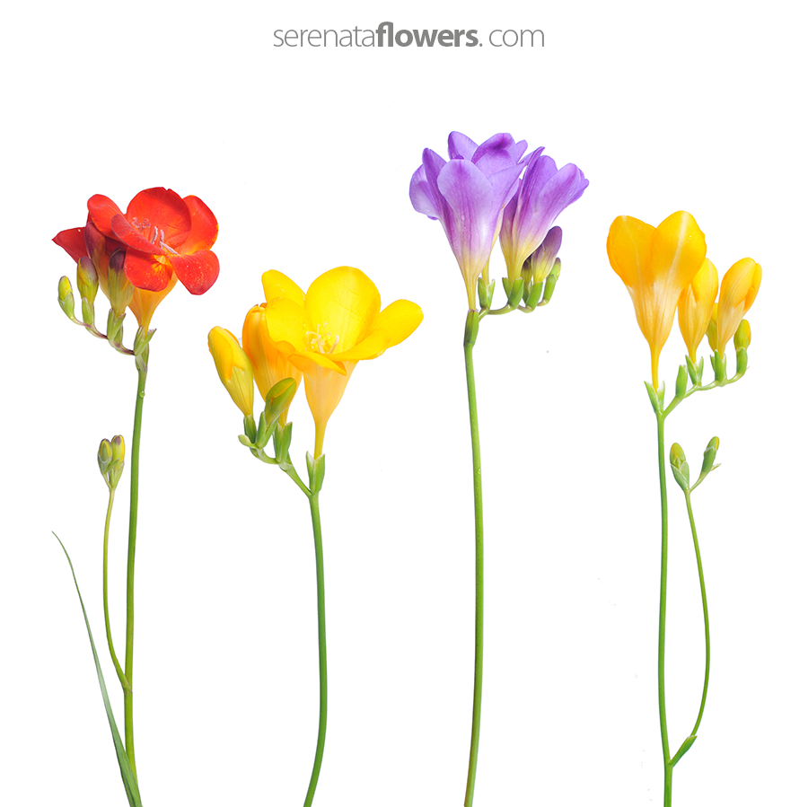 Flowers pressing