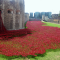 The History of Remembrance Poppies