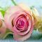 Five reasons to send flowers in November