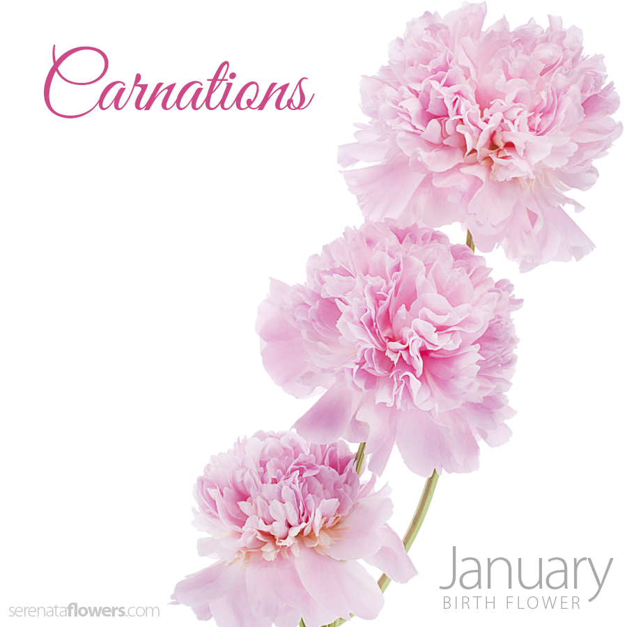 January birthstone and birth flower meaning and significance january birthstone and birth flower meaning and significance dhlflorist Gallery