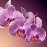 Orchids SOS