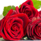 The ultimate guide to red roses