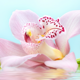 How to bring your orchid back to life