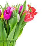 How to Grow Tulips In a Glass Jar