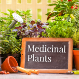 5 most powerful medicinal plants