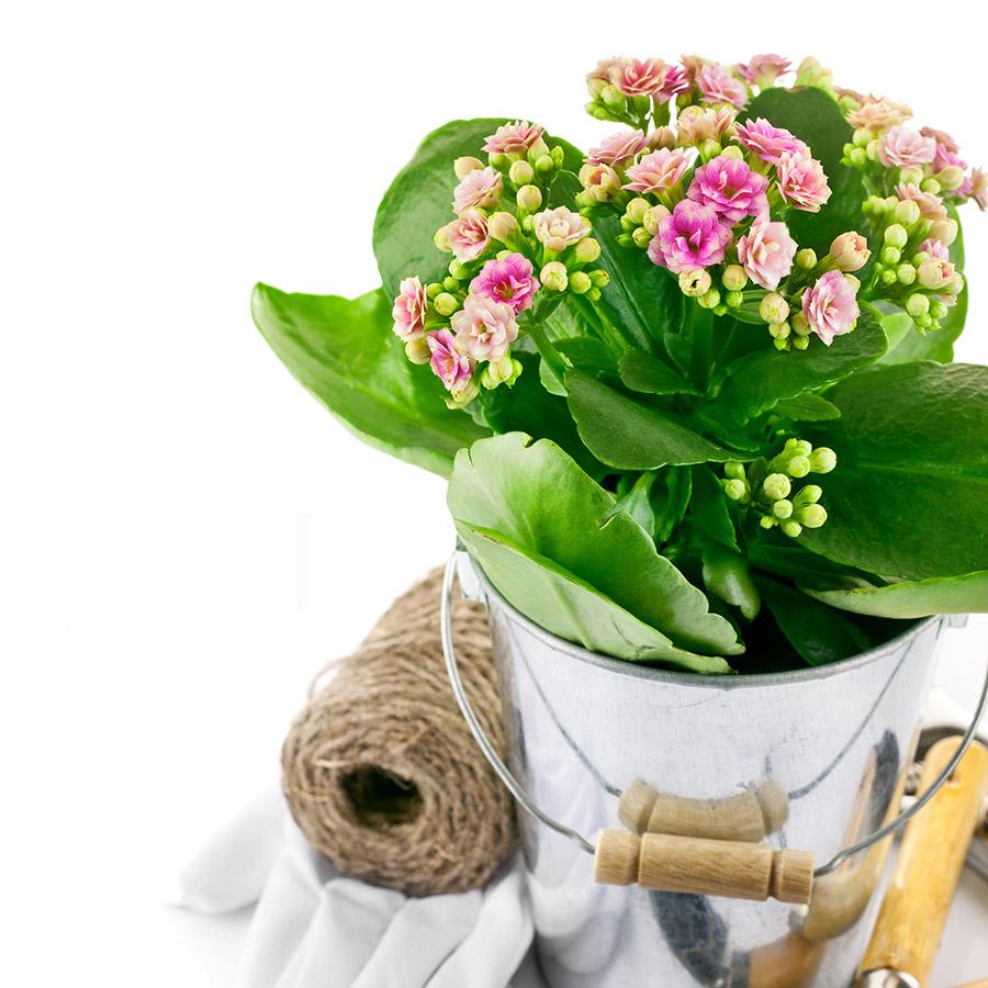 5 erreurs qui peuvent tuer vos plantes pollennation. Black Bedroom Furniture Sets. Home Design Ideas