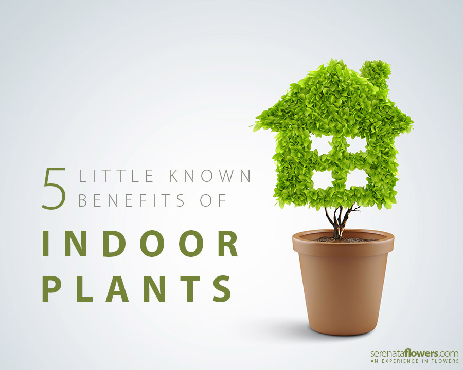 5 Little Known Health Benefits Of Indoor Plants Pollennation