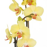 Orchids by post – all your questions answered!