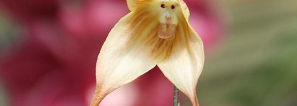 10 flowers that look like animals