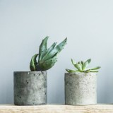 10 tips for buying plants online